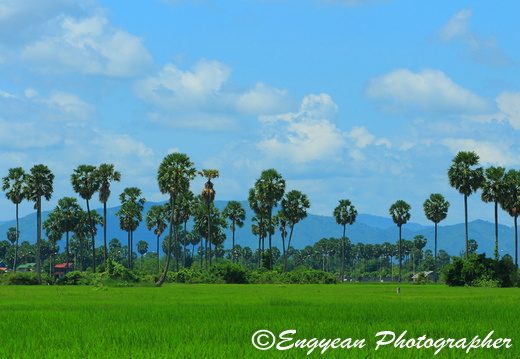 Rice Field At Kompong Speu (9218)